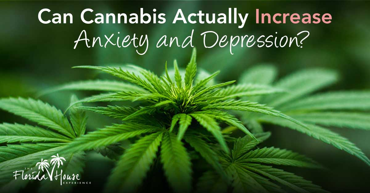 Can CAnnabis actually increase anxiety and addiction? FHE - Blog